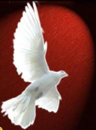 spirit-dove-2.jpg