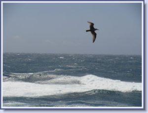 sea-seabird-resize